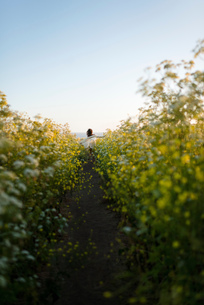 Woman walking through field of wildflowersの写真素材 [FYI03552249]