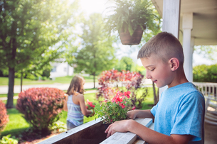 Boy planting flowers in planter boxの写真素材 [FYI03552487]