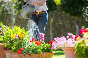 Cropped view of woman watering flower pots in gardenの写真素材 [FYI03552628]