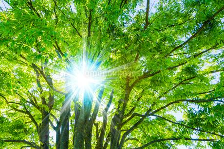 新緑の木と木漏れ日の写真素材 [FYI03553043]