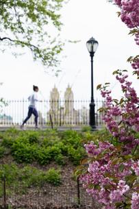 Female runner running in Central Park in spring, New York, USAの写真素材 [FYI03554340]