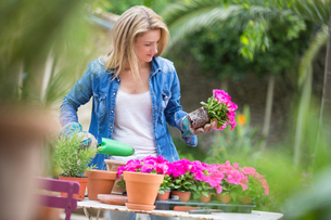 Young woman tending pink flower pot plant at garden tableの写真素材 [FYI03554625]