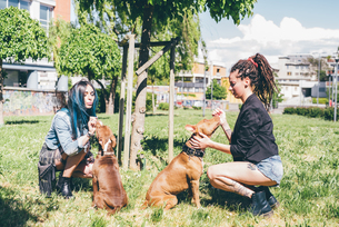 Two young women petting pit bull terriers in urban parkの写真素材 [FYI03554633]
