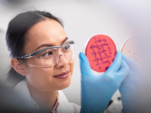 Scientist examining microbiological cultures in a petri dishの写真素材 [FYI03554806]