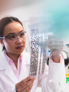 Scientist viewing a DNA profile experiment in a laboratoryの写真素材 [FYI03554814]