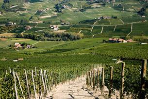 Vineyards, Barolo, Langhe, Piedmont, Italyの写真素材 [FYI03555229]