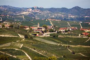 Vineyards, Nebbiolo, Langhe, Piedmont, Italyの写真素材 [FYI03555230]