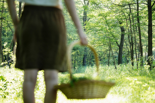 Rear view of young woman with basket of foraged wild herbs in forest, Vogogna, Verbania, Piemonte, Iの写真素材 [FYI03555715]
