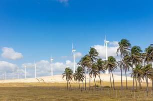Wind farm, Taiba, Cear・ Brazilの写真素材 [FYI03555794]