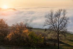 Landscape with valley mist at sunset, Langhe, Piedmont. Italyの写真素材 [FYI03556459]