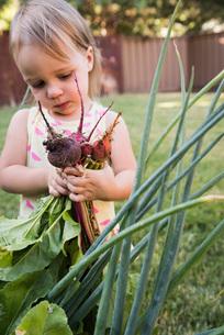 Young girl in garden, holding fresh vegetablesの写真素材 [FYI03556698]