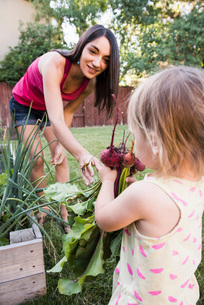 Mother and young daughter, gardening together, gathering fresh vegetablesの写真素材 [FYI03556701]