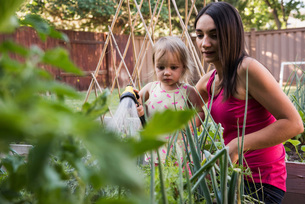 Mother and daughter in garden, watering plants together with hoseの写真素材 [FYI03556706]