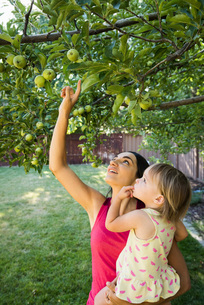 Mother and daughter in garden, looking at apples on treeの写真素材 [FYI03556707]