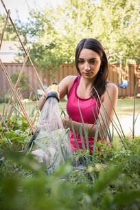 Young woman water plants in garden with garden hoseの写真素材 [FYI03556715]