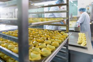 Workers hand making tortellini pasta in pasta factoryの写真素材 [FYI03556740]
