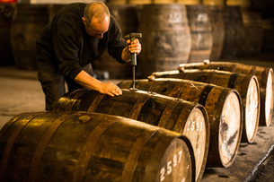 Male worker opening wooden whisky cask in whisky distilleryの写真素材 [FYI03556982]