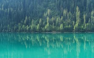 Pine trees reflected in mountain lake, St. Moritz, Canton Graubunden, Switzerlandの写真素材 [FYI03557119]