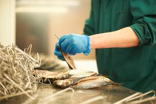 Man in smokehouse filleting fishの写真素材 [FYI03557277]