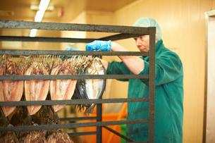 Man in smokehouse hanging fish on shelving rackの写真素材 [FYI03557279]