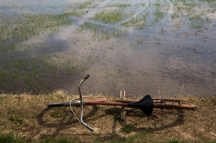 Bicycle, paddy field, Novara, Piedmont, Italyの写真素材 [FYI03557376]