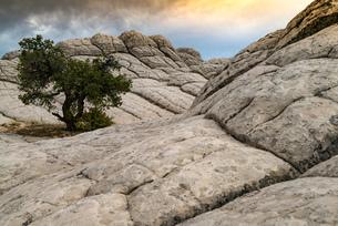 White Pocket, Paria Plateau, Arizona, USAの写真素材 [FYI03557647]