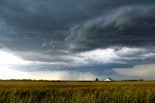 A storm over a golden wheat field threatens a farm and barn south of Tonkawa, Oklahomaの写真素材 [FYI03557847]