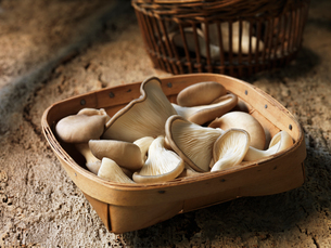 Fresh oyster mushroom selection in basketの写真素材 [FYI03557951]