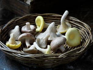 Fresh organic exotic mushroom selectionの写真素材 [FYI03557954]