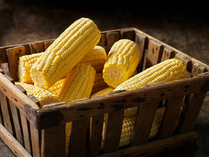 Fresh organic vegetables, tender sweet sweetcornの写真素材 [FYI03557968]