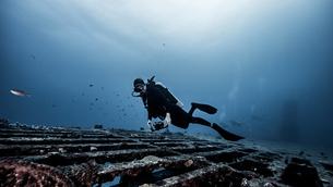 Underwater view of diver exploring shipwreck, Jupiter, Florida, USAの写真素材 [FYI03558445]