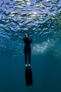 Diver swimming through shoal of sardines, Port St. Johns, South Africaの写真素材 [FYI03558495]