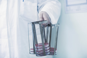 Scientist carrying rack with petri dishes in laboratoryの写真素材 [FYI03558530]