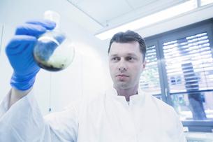 Scientist examining sample in beakerの写真素材 [FYI03558536]
