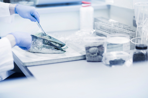 Scientist analysing fish sample in laboratoryの写真素材 [FYI03558538]