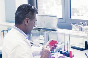 Scientist examining sample in petri dishの写真素材 [FYI03558552]