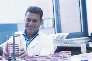 Scientist arranging petri dishes into rackの写真素材 [FYI03558554]