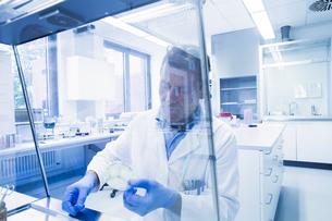 Scientist examining sample inside petri dish in laboratoryの写真素材 [FYI03558557]