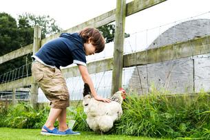 Boy petting chickenの写真素材 [FYI03560142]