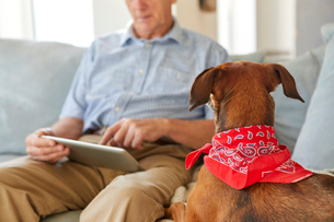 Dog watching owner use digital tabletの写真素材 [FYI03560343]