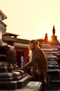 Swayambhunath, the monkey Temple, Kathmandu, Nepalの写真素材 [FYI03560407]