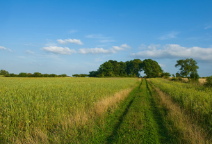 Field with pathway,  Cherington, Gloucestershire, England, UKの写真素材 [FYI03560452]