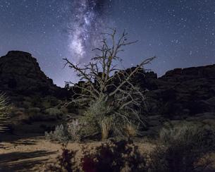 Joshua tree and starry night sky, Joshua Tree national park, California, USAの写真素材 [FYI03561324]