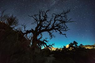Silhouette of joshua tree and starry night sky, Joshua Tree national park, California, USAの写真素材 [FYI03561325]