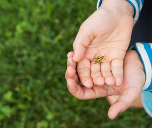 Hands of boy holding insectの写真素材 [FYI03561515]