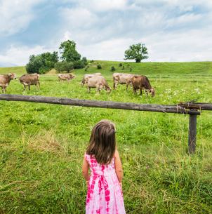 Real view of girl looking at cows grazing in field, Fuessen, Bavaria, Germanyの写真素材 [FYI03561517]