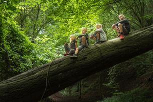 Boy in forest sitting on fallen treeの写真素材 [FYI03561558]