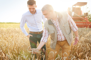 Farmer and businessman in wheat field quality checking wheatの写真素材 [FYI03561832]