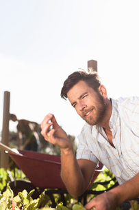 Mature man inspecting tiny seedling in gardenの写真素材 [FYI03562635]
