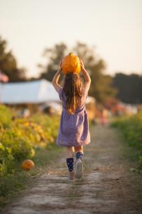 Young girl walking along rural pathway, carrying pumpkin on head, rear viewの写真素材 [FYI03562776]